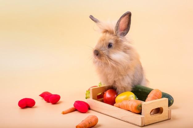Conigli su pavimenti in legno, carote, cetrioli, pomodori e botti su pavimenti in legno