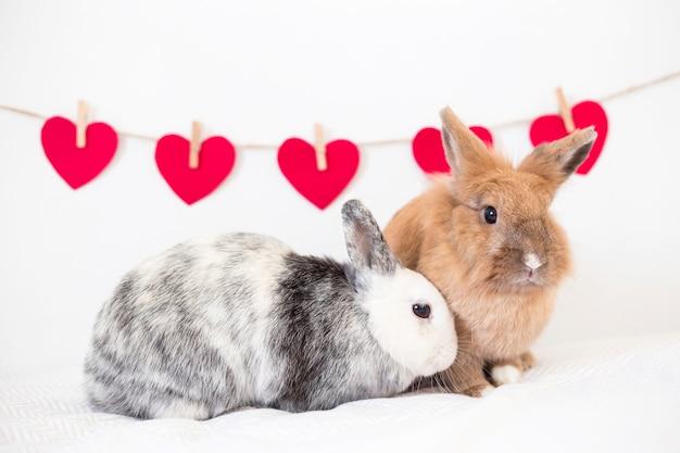 Conigli vicino alla raccolta di cuori di ornamento su twist