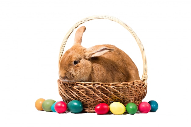 Coniglietto di pasqua rosso in un cesto con uova, isolare, preparazione per la festa di pasqua