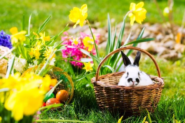 Coniglietto di pasqua sul prato con il cestino e le uova