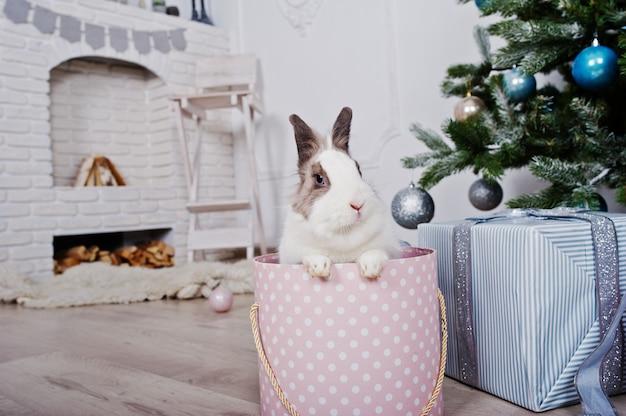 Coniglietto divertente al contenitore di regali sotto l'albero di nuovo anno