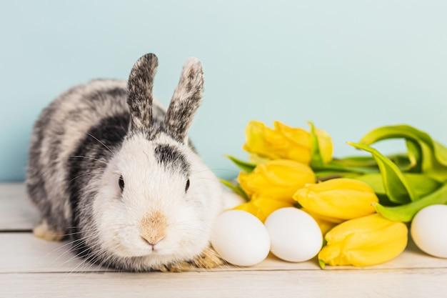Coniglietto in bianco e nero sveglio accanto alle uova di pasqua e ai tulipani freschi gialli sopra una tavola di legno con fondo blu