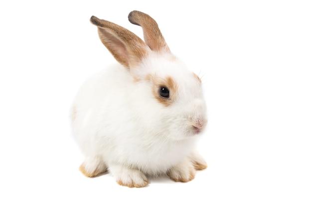 Coniglio adorabile del bambino su priorità bassa bianca
