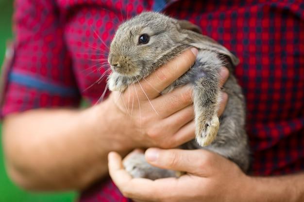Coniglio. animali e persone