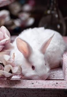 Coniglio bianco nella scatola viola alla vigilia di pasqua e fiori di magnolia
