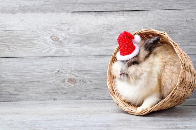Coniglio bianco peloso bianco, nascosto in un cestino di legno marrone chiaro sulla testa, con indosso un cappello rosso di natale.