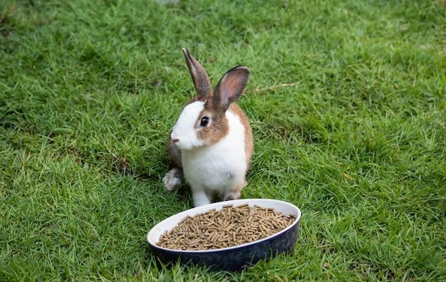 Coniglio che mangia l'alimento delle palline su erba verde.