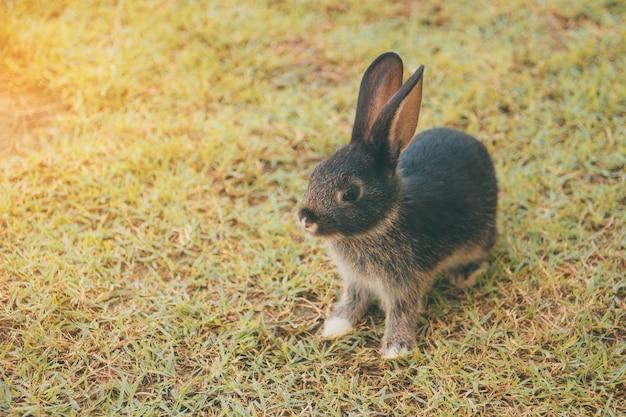 Coniglio coniglietto in giardino