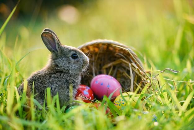 Coniglio del coniglietto di pasqua e coniglio delle uova di pasqua che si siedono sull'erba