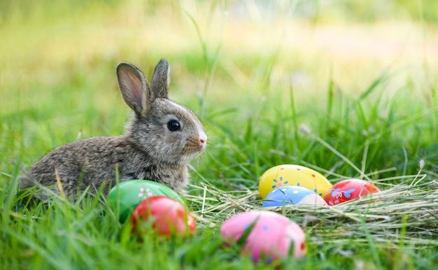 Coniglio di pasqua e uova di pasqua piccolo coniglio sul verde