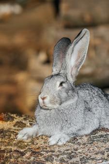 Coniglio grigio in erba verde in azienda