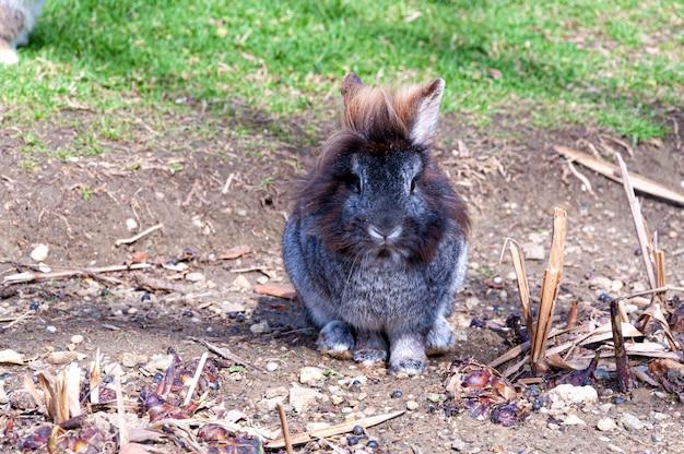Coniglio peloso