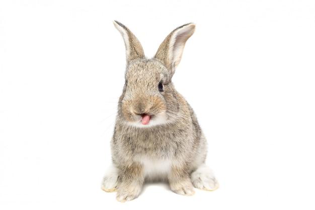 Coniglio su uno sfondo bianco