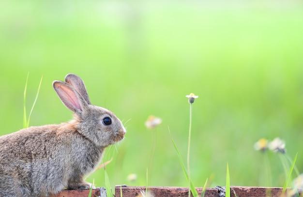 Coniglio sveglio che si siede sul mattone e sul prato verde della molla del campo