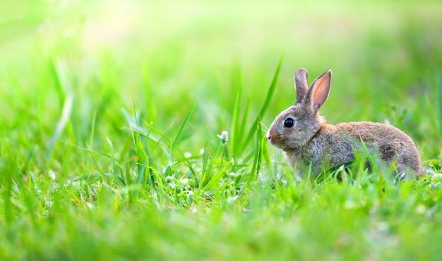 Coniglio sveglio che si siede sul prato verde della molla del campo