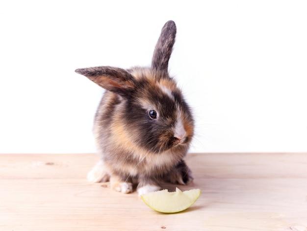 Coniglio tricolore con grandi orecchie che mangia una mela