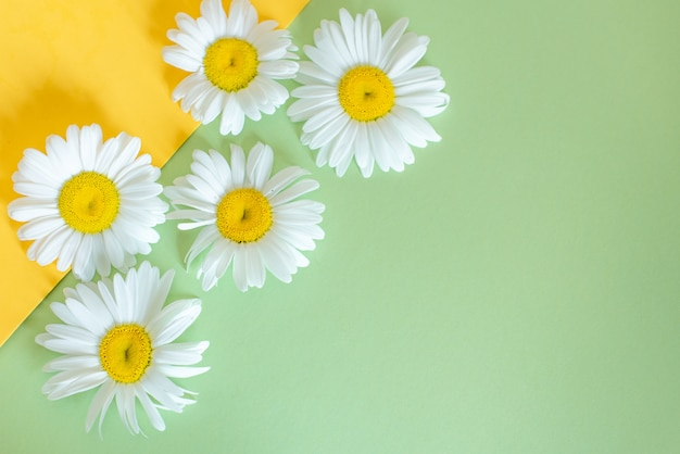 Cono di cialda con fiori di camomilla, foglie verdi