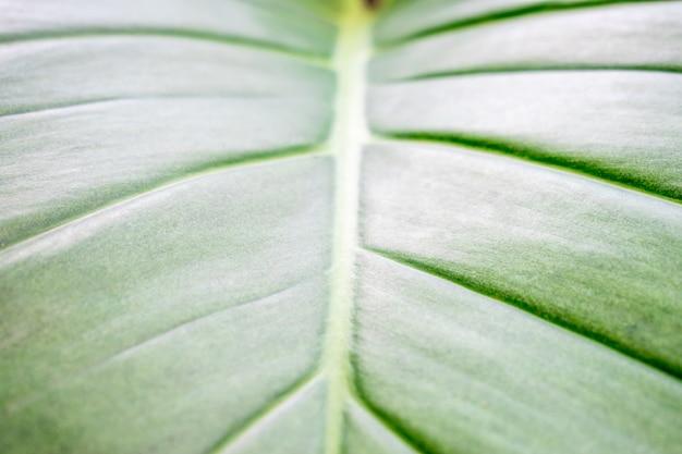 Consistenza delle foglie verdi