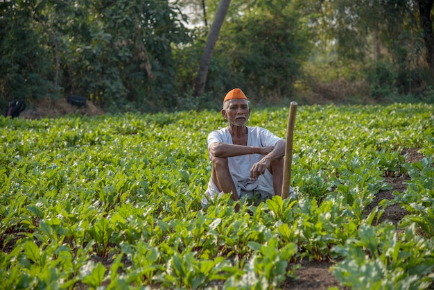 Contadino che lavora nel campo delle barbabietole, una scena agricola rurale indiana.