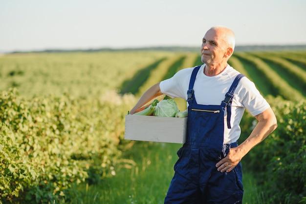 Contadino con scatola di legno di verdure in campo