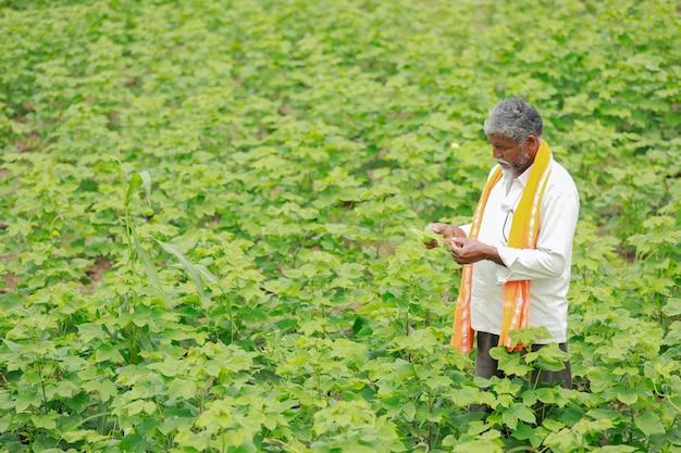 Contadino indiano al giacimento di cotone, india