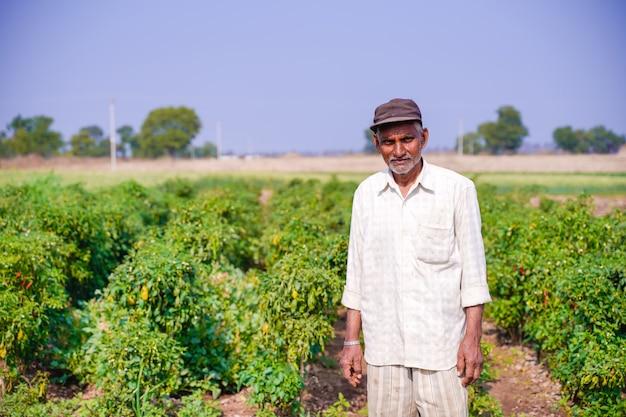 Contadino indiano nel campo di peperoncino verde