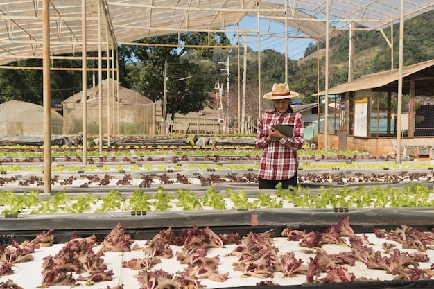 Contadino intelligente e concetto di prodotti vegetali; giardiniere femminile che controlla di recente le piante in azienda agricola con la compressa e che utilizza applicazione per il supporto dell'azienda agricola astuta