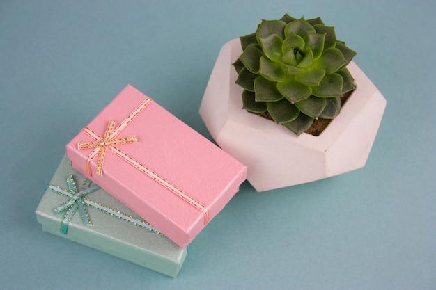 Contenitori di regalo di vista superiore e pianta succulente su sfondo blu
