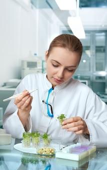 Controllo di qualità. la giovane scienziata seleziona la nuova razza di germogli di crescione ottimizzati per il consumo