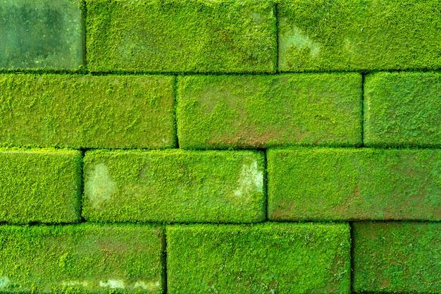 Coperchio del muro di mattoni antico con muschio, priorità bassa