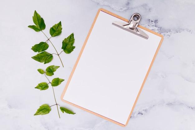 Copi gli appunti dello spazio con le foglie di cenere comuni