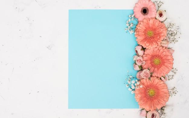 Copi la vista superiore dei fiori della gerbera della molla dello spazio