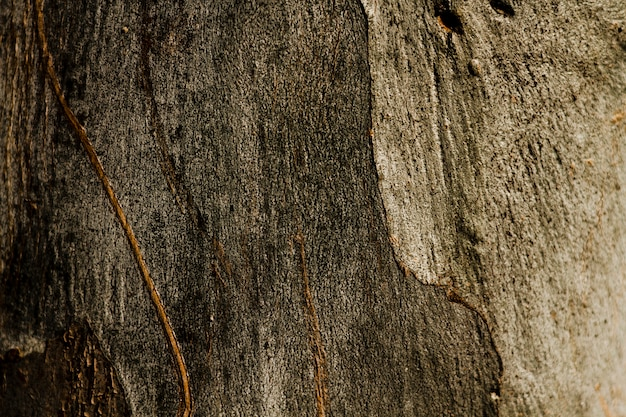 Copi lo spazio struttura di legno arrugginita dell'albero