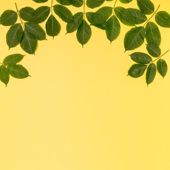 Copia spazio fogliame design su sfondo giallo