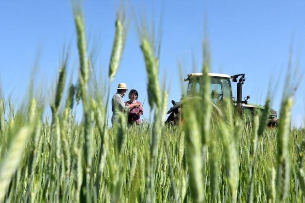 Coppia di contadini in un campo di grano con un trattore