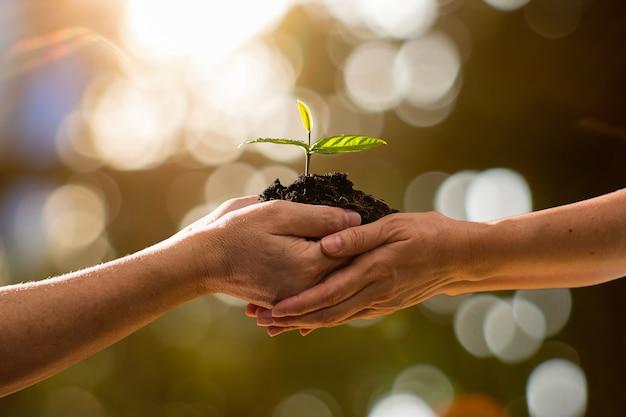 Coppia le mani che tengono insieme la pianta verde sul fondo del bokeh