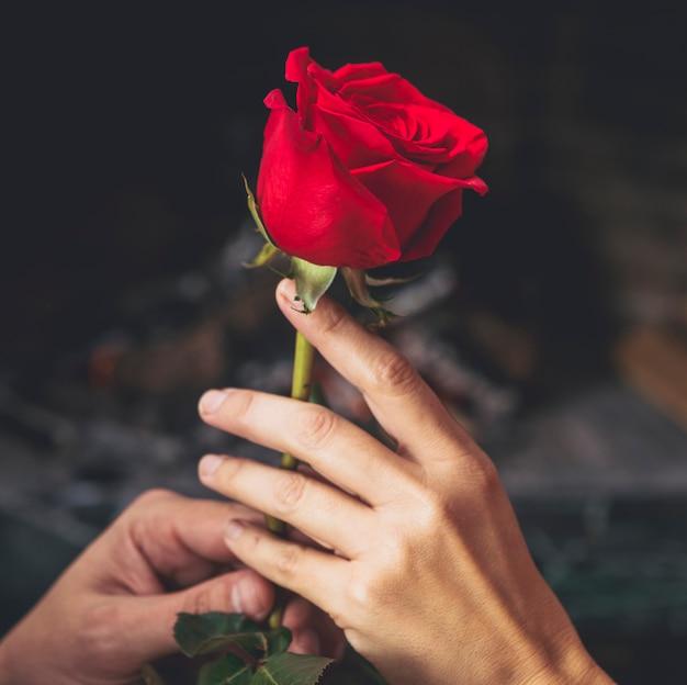 Coppie che tengono la rosa rossa in mani