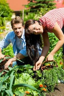 Coppie felici che raccolgono le verdure nel loro giardino