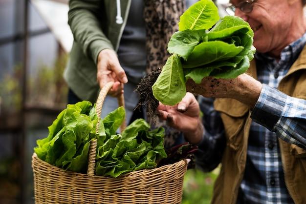 Coppie senior che piantano le verdure al cortile del giardino