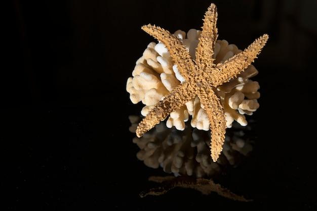Coralli su sfondo nero riflettente