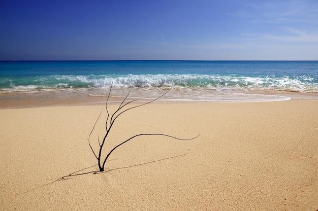 Corallo ancora macro nella sabbia dei caraibi, riva del mare