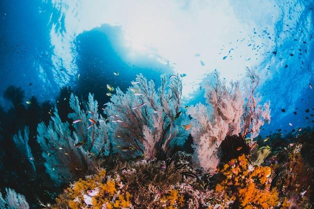 Corallo e pesce intorno a sha'ab mahmud