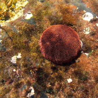 Corallo sott'acqua, tago cove, isabela island, isole galapagos, ecuador