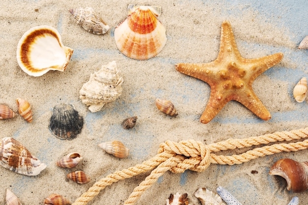 Corda nautica con stelle marine accanto