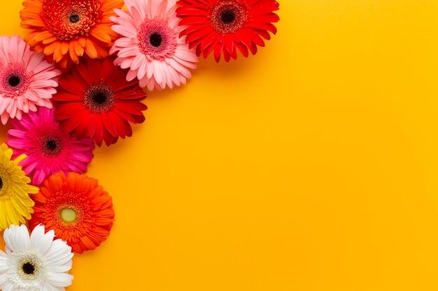 Cornice con fiori di gerbera e copia spazio
