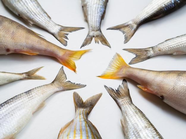 Cornice di code di pesce fresco vista dall'alto