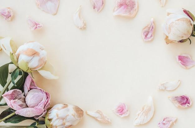 Cornice di gemme di peonia secca e petali secchi