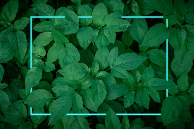 Cornice di linee di luce al neon turchese sullo sfondo di foglie verde scuro