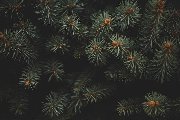 Cornice di natale sullo sfondo dell'albero di natale, tema di capodanno. sfondo per il tuo dispositivo