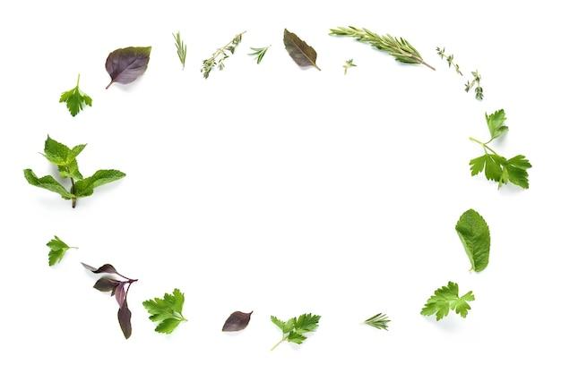 Cornice fatta di varie erbe fresche isolate su sfondo bianco - rosmarino, prezzemolo, timo, menta e coriandolo. modello creativo con copia spazio.